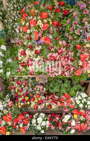 Un fornitore di stand riempito con tropicali colorati fiori - Anthurium, Flamingo Fiore e altre specie esotiche. Foto Stock