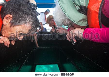 I turisti a bordo di una barca dal fondo di vetro godere una vista in acqua fuori le Isole Galapagos. Foto Stock