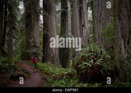 Un uomo che corre il sentiero attraverso enormi alberi. Foto Stock