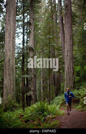 Un uomo che corre il sentiero attraverso grandi alberi. Foto Stock