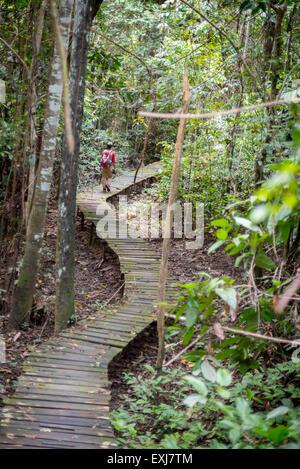 L'uomo cammina lungo la passerella di legno tropicale attraverso la foresta di pianura di Sangkima, Kalimantan, Foto Stock