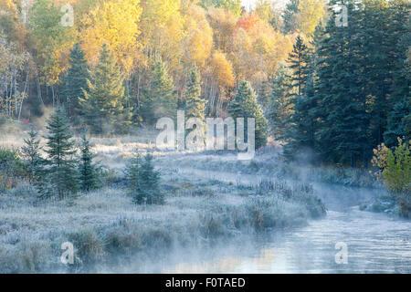 Frosty mattina autunnale, Junction Creek, vivace, Ontario, Canada. Foto Stock