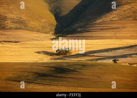 Terreni agricoli di laminazione nella regione di Overberg vicino Villiersdorp, Western cappuccio, Sud Africa Foto Stock