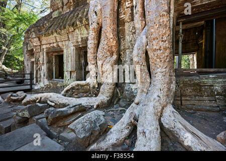 Ta Prohm tempio. Parco Archeologico di Angkor, Siem Reap Provincia, in Cambogia. Foto Stock