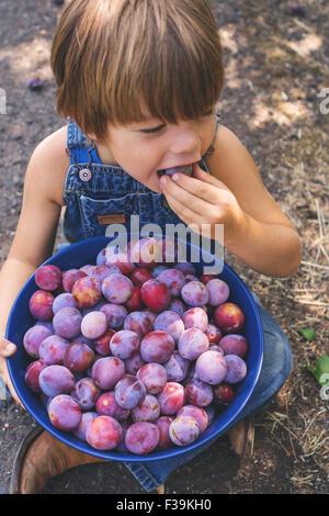 Vista aerea di un ragazzo di mangiare appena raccolto prugna Foto Stock