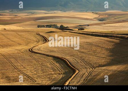 Terreni agricoli di laminazione nella regione di Overberg vicino Villiersdorp, Western Cape, Sud Africa Foto Stock