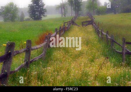 Nebbioso giorno di estate in Vermont lungo la linea di recinzione, STATI UNITI D'AMERICA Foto Stock