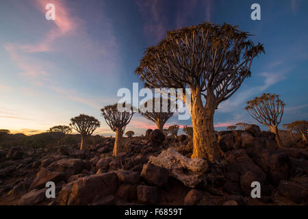 Per Quiver Tree Forest National Monument al tramonto, Namibia, Africa Foto Stock