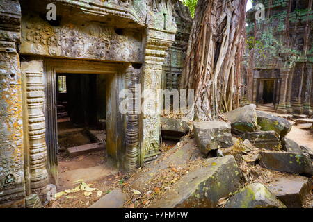 Ta Prohm tempio di Angkor, Cambogia, Asia Foto Stock