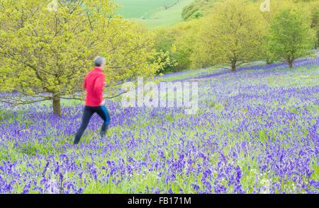 Maschio maturo runner sul sentiero attraverso Bluebells in Newton legno vicino Roseberry Topping, North York Moors Foto Stock
