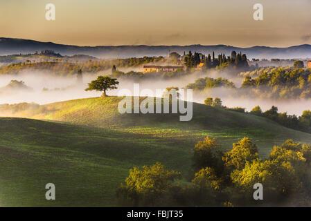 Alberi e frutteti nei campi italiani. Toscana Autunno giorno. Foto Stock