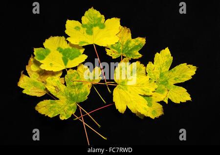 fogliame di autunno Foto Stock