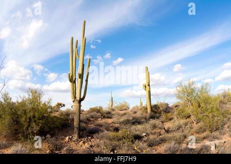 Una immagine della superstizione deserto in Arizona mostra il dettaglio robusto di un deserto secco con un cactus Foto Stock