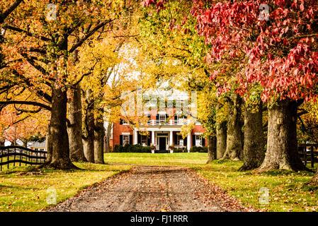 Viale alberato, giardino verde 22439 Green Garden Road, Upperville, Virginia Foto Stock