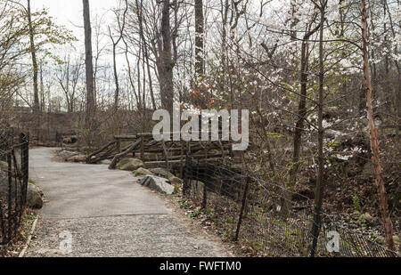 Percorso e ponte di legno nei boschi di nord di Central Park di New York City, in primavera su un nuvoloso giorno Foto Stock