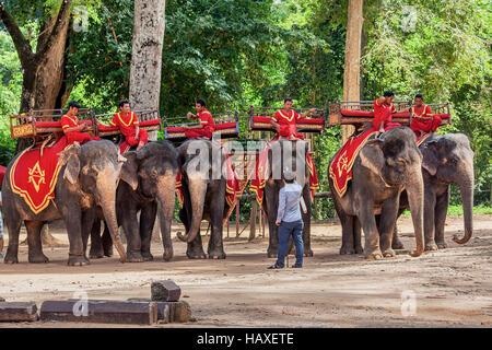 Elefanti asiatici usata per prendere i turisti in un giro intorno a Angkor Thom prendere un periodo di riposo sotto Foto Stock