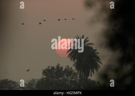Silhouette di uccelli che volano sopra il lago contro il tramonto Foto Stock