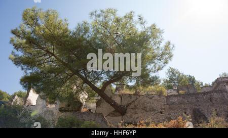 Albero cresce attraverso una parete in un villaggio abbandonato in Turchia Foto Stock