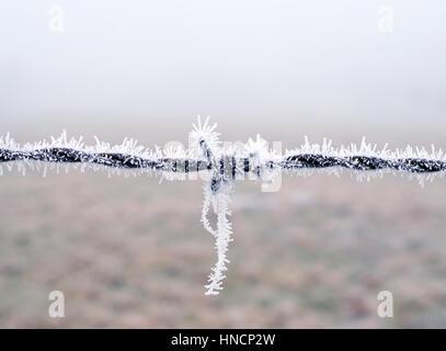 Vista ravvicinata di barbwire coperto di brina, Baviera, Germania Foto Stock