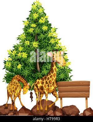 Due giraffe dal cartello in legno illustrazione Foto Stock