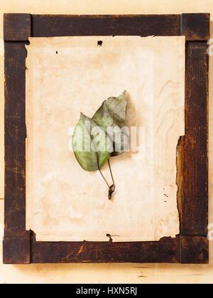 Due foglie appassite su ingiallito sfondo della carta disposti in un legno invecchiato la cornice in stile di un'arte Foto Stock