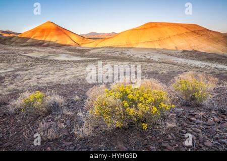 Sunrise sulle colline dipinte con fiori in primo piano, John Day Fossil Beds National Monument, Oregon. Foto Stock