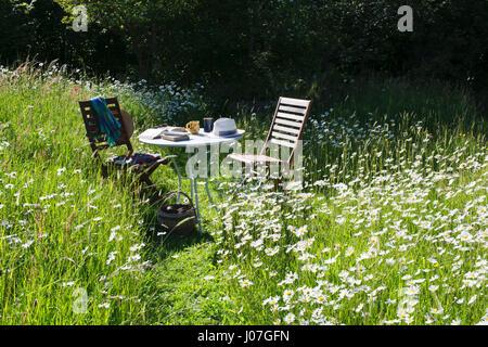 Due sedie e un tavolo con libri, tazze e cappello da sole in un prato di fiori selvaggi su un caldo sole nel pomeriggio Foto Stock