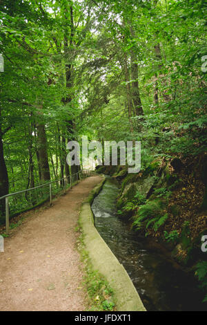 Percorso di foresta con stream Foto Stock