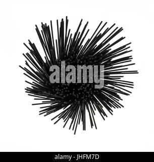Sopra la testa vista di seppia spaghetti nero su bianco sullo sfondo isolato in un round formato a spirale. Foto Stock
