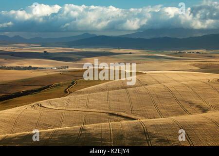 Terreni agricoli di laminazione nella regione di Overberg vicino Villiersdorp, Western Cape, Sud Africa. Dicembre Foto Stock
