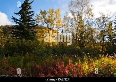 I colori autunnali sul versante della montagna Foto Stock
