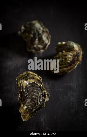 Materie ostriche sulla scheda di grafite, Francia Foto Stock