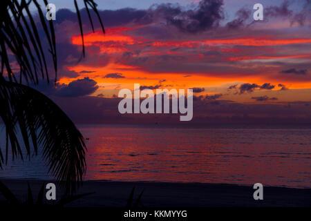 Silhouette di una Palma nel tramonto alle Maldive. La Palma è situato nella parte anteriore del telaio. Vi è un Foto Stock