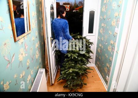 Donna prendendo un usato albero di Natale al di fuori di un fronte casa porta sulla dodicesima notte nel nuovo anno Foto Stock