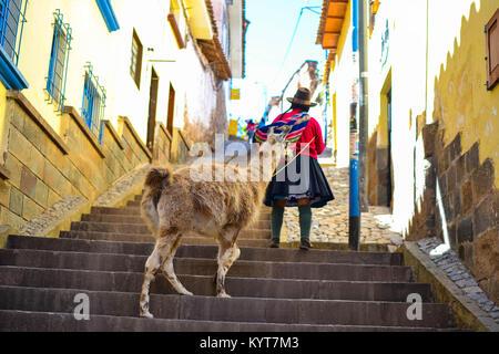 Alpaca in Valle Sacra Foto Stock