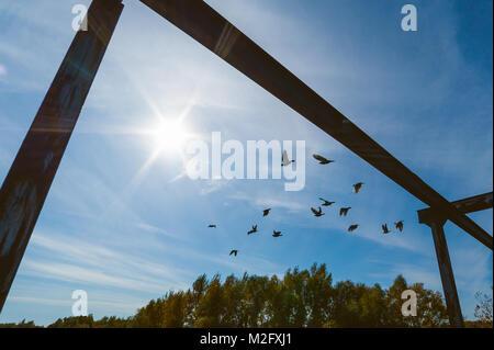 Stormo di piccioni sono battenti contro il cielo Foto Stock