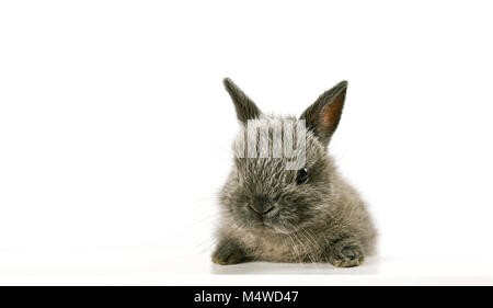 Close up baby bunny Foto Stock