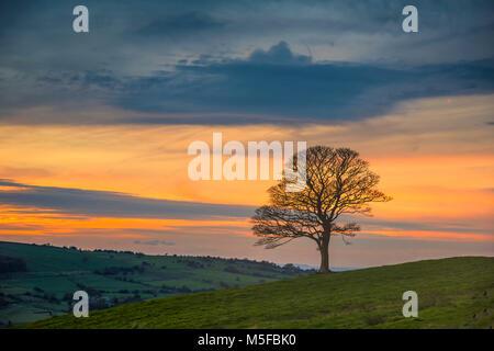 Un albero maturo nella e vening tramonto dalla popolare area di scarafaggi in Staffordshire Peak District. Inghilterra, Foto Stock