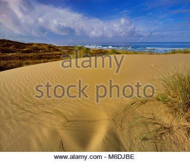 Dune, Stato Pismo Beach, San Luis Obispo County, California Foto Stock