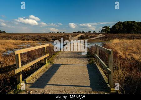 Il Footbridge e il percorso attraverso la piscina poco profonda nella nuova foresta Foto Stock