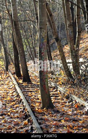 Berlino, Germania, gli alberi crescono in un deragliato letto binario Foto Stock