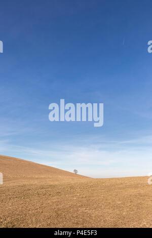 Un lontano, albero solitario su una nuda collina, sotto un cielo blu con nuvole bianche Foto Stock