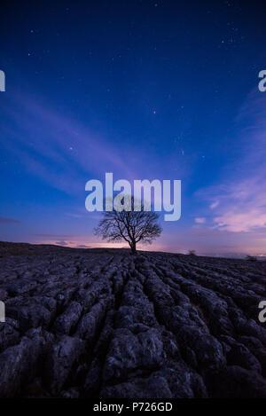 Un lone tree sul marciapiede di calcare sulle colline sopra il villaggio di Malham nel Yorkshire Dales, nello Yorkshire, Inghilterra, Regno Unito, Europa Foto Stock