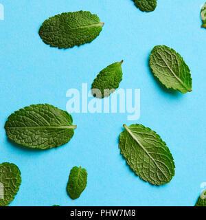 Verde menta foglie di diverse dimensioni su uno sfondo blu Foto Stock