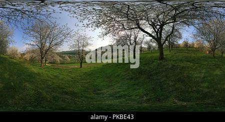 Fiore di Ciliegio In Werratal vicino a Witzenhausen 2 Foto Stock