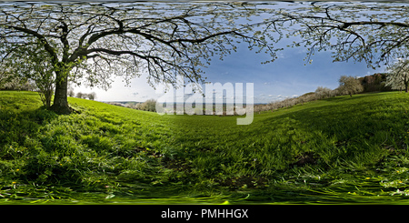 Gli alberi di ciliegio vicino Dettingen/Teck Foto Stock