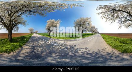 La fioritura dei ciliegi - Blatné Foto Stock