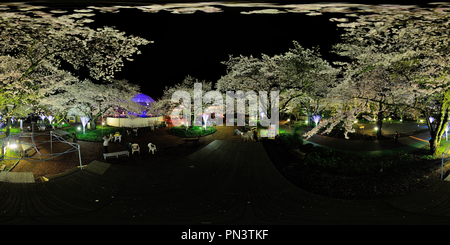 Yozakura 1(Cherry Blossom di notte) Foto Stock