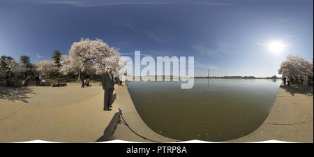 Bacino di marea di fiori di ciliegio Foto Stock