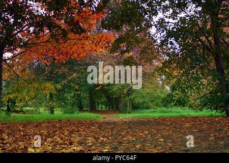 Foglie di autunno sul percorso attraverso gli alberi Foto Stock